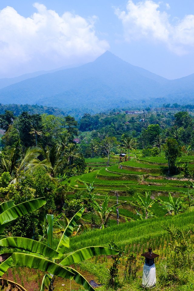 A view of rice terraces in Jatiluwih