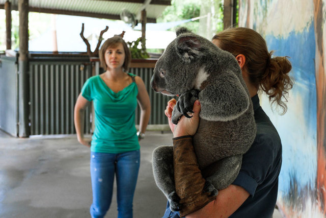 Excited lady looking forward to cuddle not so excited koala