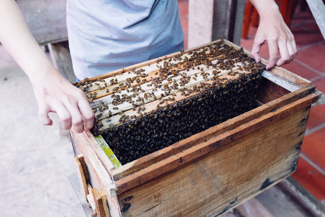 A part of the tour was also a demonstration from local beekeeper