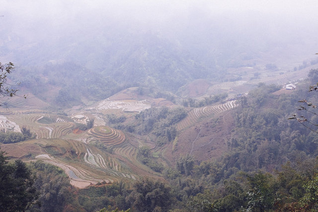 The last view of rice terraces in Muong Hoa Valley